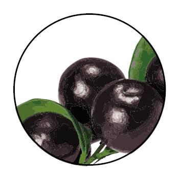Schwarze Acai-Beeren im Kreis, auf weißem Hintergrund.
