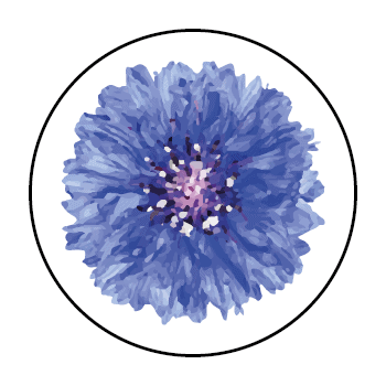 A cornflower in a circle, on a white background.
