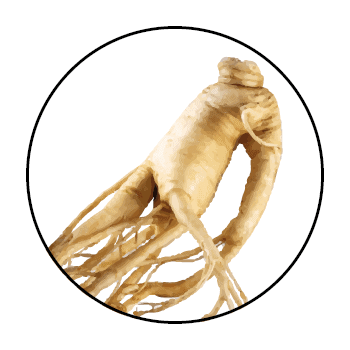 A ginseng root in a circle, on a white background.