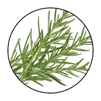 Rosemary stems in a circle on a white background.