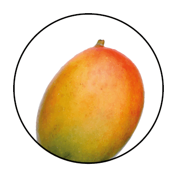 A mango in a circle on a white background.