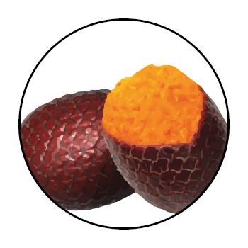 </p> <p>Orangefarbene Buriti-Samen in einem Kreis, auf einem weißen Hintergrund.</p> <p>