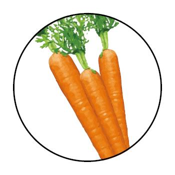 </p> <p>Drei Karotten im Kreis, auf weißem Hintergrund.</p> <p>