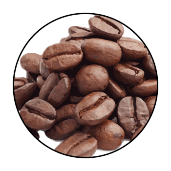 Coffee beans in a circle, on white background.
