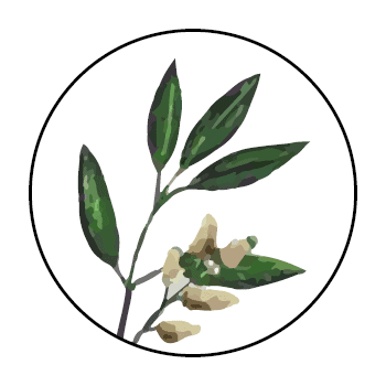 Litsea branch in a circle, on white background.