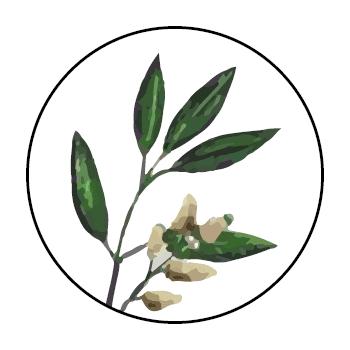 Branche de lytsée dans un cercle, sur fond blanc.