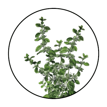 Lemon balm stems in a circle, on white background.