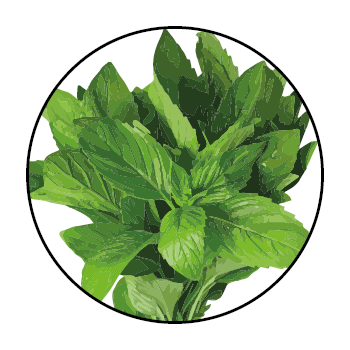 Mint leaves in a circle on a white background.