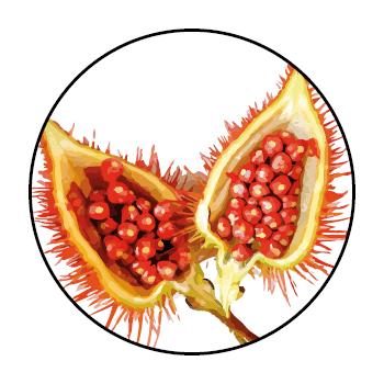 Offene Annattofrucht mit leuchtend roten Samen in der Schale, bedeckt mit kleinen Ähren.