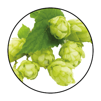 Hops seen up close, in a circle on a white background.