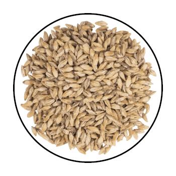 De multiples graines de malt de froment, dans un cercle sur fond blanc.