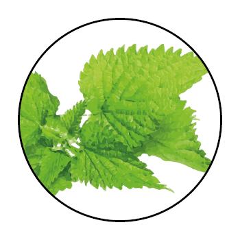 Des feuilles d'ortie dans un cercle, sur fond blanc.