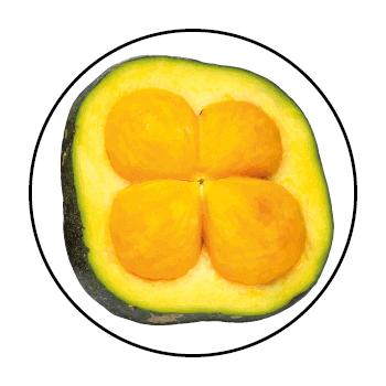 Un piqui coupé en deux, dans un cercle sur fond blanc.