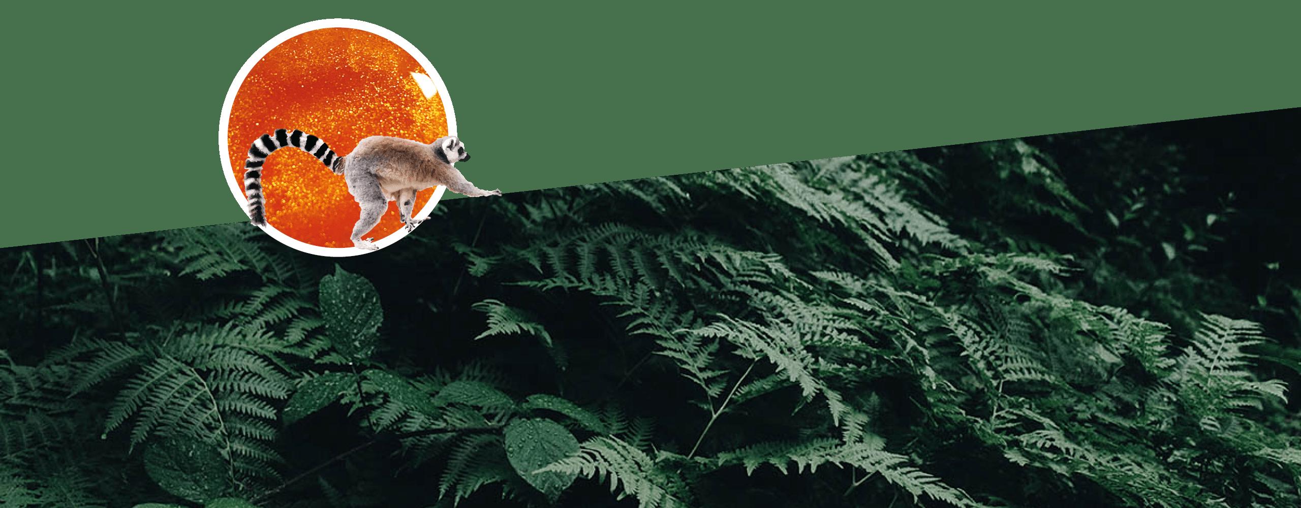 """Un lémurien """"escaladant"""" des fougères dans une construction graphique."""